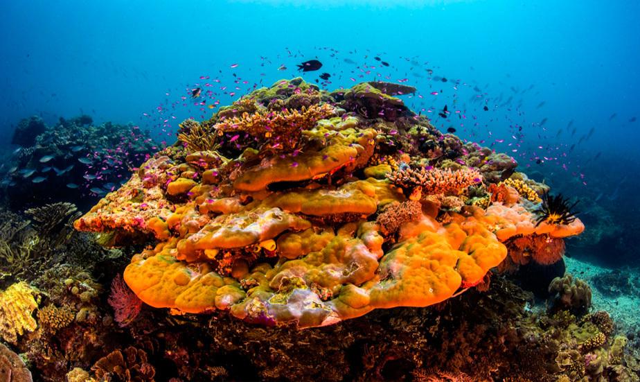 Reef-Coral